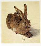 Albrecht Dürer Rabbit Print