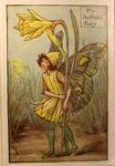 The Daffodil Fairy