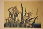 Japanese Plant Print
