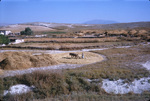B41.083 Cow Pasture