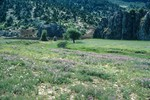 B42.093 Meadow