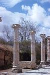 B04.055 Leptis Magna - Cardo by Denis Baly