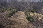 KCES Pines 10' Downslope