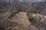 KCES Pines 10' Downslope