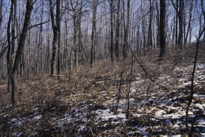 South woods-North of Pines Edge
