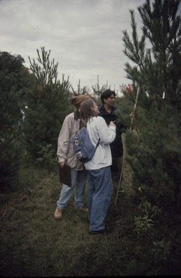 Measuring Pines KCES