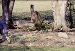 KCES Woodland Garden