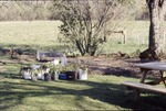 KCES Plants to transplant to woodland garden