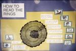 Tree Ring Display