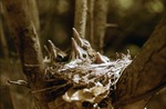 4 wood nestings in nest by David Heithaus
