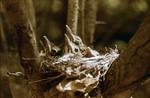 4 wood nestings in nest