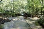 Wolf Run flood tree fall damage