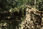 Wolf Run flood tree fall damage-Down Black Willow Tree w/Sprouts