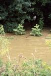 June Flood high water at River Trail entrance, Laymon Road Bridge