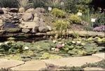 KCES Pond Garden