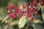 KCES Butterfly Garden red flowers