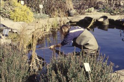 Pat in pond