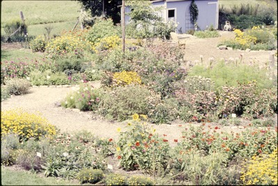 Butterfly Garden-High view paths & shed