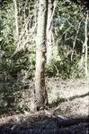 Tree Damage-Bike Trail