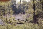 Pond by Woodpecker nest