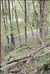 Fern Woods by Kenyon Gap Trail