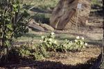 KCES Trillium Woodland Garden