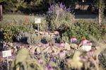 Medicinal Garden - Back, Hill KCES