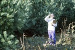 BFEC Measuring Pine Height
