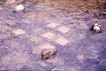 Tiles for Stream Colonization Biolog, KCES Wolf Run