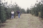 Pine Grown 15' KCES