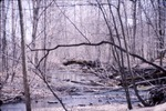 Wolf Run-In woods N. 229 KCES