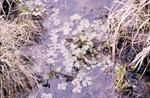 Wetland Plant KCES