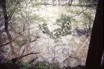 KCES Flood