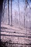 Bishops Backbone woods, KCES Slope