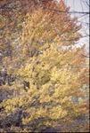 Fall Colors KCES