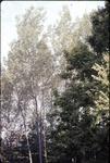 Aspen-early Fall KCES
