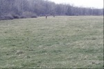 Marshy grassland near Wolf Run KCES