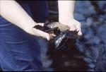 KCES Salamander Eggs