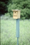 BFEC Bluebird Box