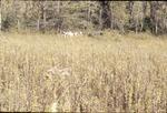 BFEC 5th Anniversary Celebration hay ride across prarie