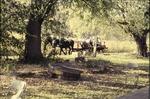 BFEC 5th Anniversary celebration hay ride behind woodland gardens