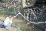 BFEC Kokosing River: Pat Photographing tangled roots on bank