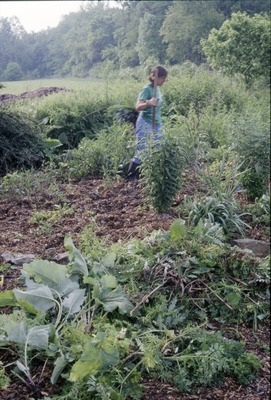BFEC Butterfly Garden: Pat Weeding Prarie Section