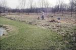 BFEC Volunteer day hacking mesocosm weeds