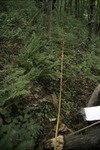 BFEC deer browsing study:T1 South Woods Gap Trail Fense