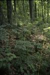 BFEC deer browsing study:T2 South Woods Gap Trail Fense