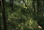 BFEC Deer Exclosure & Adjacent trail