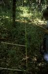 BFEC Grazing study: Shana West T21 upper slope habitat