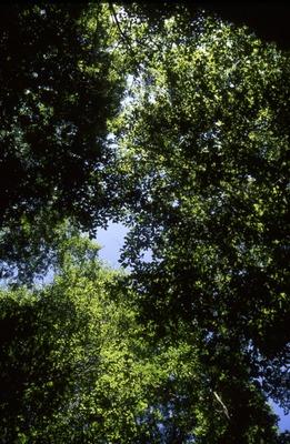 BFEC Grazing study: Shana West T21 Upper slope Canopy