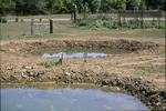 Pond Project Water!
